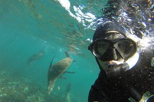 Snorkelwithseal300